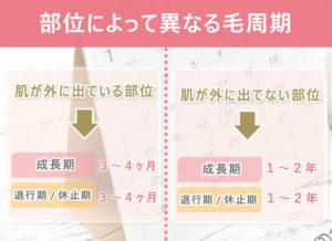 毛周期は体の部位ごとでそれぞれ違う。肌が(衣類の)外に出ている部位⇒成長期3~4ヶ月 退行期/休止期3~4ヶ月 肌が(衣類の)外に出ていない部位⇒成長期1~2年 退行期/休止期1~2年